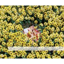 Panini 2011 Bild Nr 119  Miniatur Wunderland